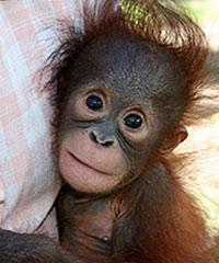 monti Adopt an Ape